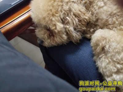 亳州寻狗,狗狗被人抱走了,求爱心人士关注,它是一只非常可爱的宠物狗狗,希望它早日回家,不要变成流浪狗。