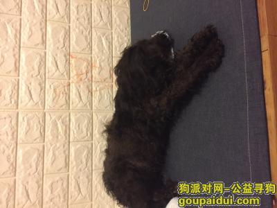 嘉兴寻狗主人,捡到一只黑色贵宾,寻找狗主人,它是一只非常可爱的宠物狗狗,希望它早日回家,不要变成流浪狗。