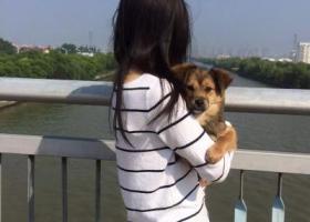 寻狗启示,重谢寻狗,家中病父的寄托,跪求!!,它是一只非常可爱的宠物狗狗,希望它早日回家,不要变成流浪狗。
