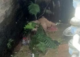 寻狗启示,重金寻狗!东凤同安市场附近走丢的!,它是一只非常可爱的宠物狗狗,希望它早日回家,不要变成流浪狗。