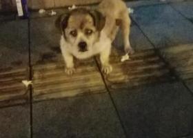 寻狗启示,番禺区里仁洞向阳大街靠马路的走廊位置!,它是一只非常可爱的宠物狗狗,希望它早日回家,不要变成流浪狗。