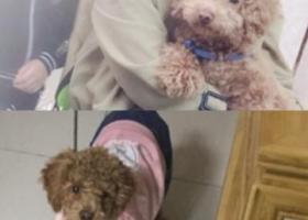 寻狗启示,请大家帮帮忙找一下狗狗,它是一只非常可爱的宠物狗狗,希望它早日回家,不要变成流浪狗。
