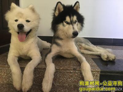 衢州寻狗网,寻狗,迫切寻狗,它是一只非常可爱的宠物狗狗,希望它早日回家,不要变成流浪狗。