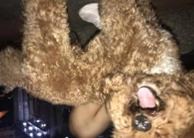 寻狗启示,拱墅区7月27日晚十点,它是一只非常可爱的宠物狗狗,希望它早日回家,不要变成流浪狗。
