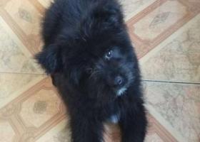 寻狗启示,金华浦江浦阳街道月泉西路花木市场附近走丢一条黑色小公狗 希望看见的朋友们能告知 谢谢,它是一只非常可爱的宠物狗狗,希望它早日回家,不要变成流浪狗。