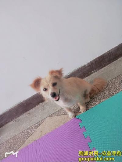 衡水寻狗启示,爱犬走丢望爱心人士伸出援助之手对本人意义重大,它是一只非常可爱的宠物狗狗,希望它早日回家,不要变成流浪狗。