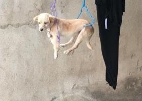 寻狗启示,四个月的狗狗走失,大家帮帮忙,它是一只非常可爱的宠物狗狗,希望它早日回家,不要变成流浪狗。