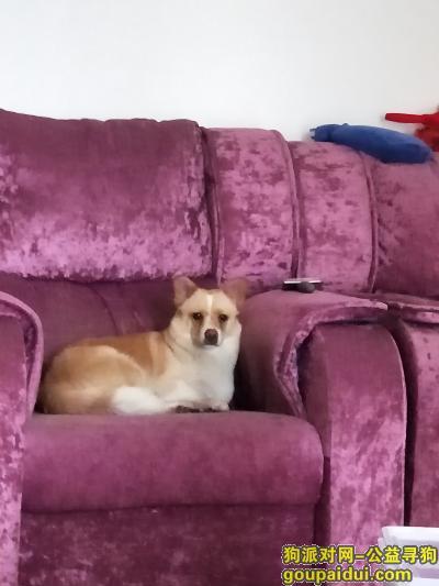 安庆找狗,狗狗丢失,必有重谢!,它是一只非常可爱的宠物狗狗,希望它早日回家,不要变成流浪狗。
