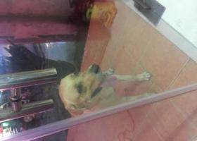 寻狗启示,东莞市区东城岗贝罗沙路21号永帮汽车钥匙,它是一只非常可爱的宠物狗狗,希望它早日回家,不要变成流浪狗。