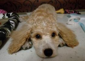 寻狗启示,请各位好心人帮忙找我家狗狗 真的非常急,它是一只非常可爱的宠物狗狗,希望它早日回家,不要变成流浪狗。