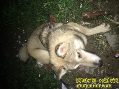 惠州找狗主人,在惠州惠城区,八方新越楼下,它是一只非常可爱的宠物狗狗,希望它早日回家,不要变成流浪狗。