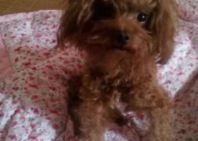 寻狗启示,寻爱狗 捡到者还我 谢谢,它是一只非常可爱的宠物狗狗,希望它早日回家,不要变成流浪狗。