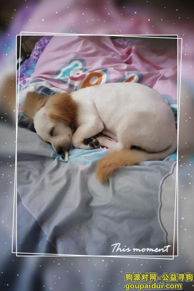 淮安寻狗主人,西苑新村南门捡到一号泰迪串串。,它是一只非常可爱的宠物狗狗,希望它早日回家,不要变成流浪狗。