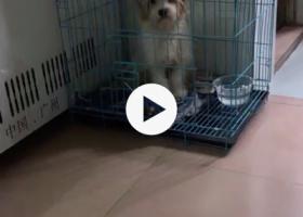 寻狗启示,番禺区石楼镇一只小白串串狗走丢,它是一只非常可爱的宠物狗狗,希望它早日回家,不要变成流浪狗。
