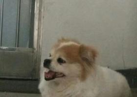 寻狗启示,寻找盐城市区双元路走失狗狗,它是一只非常可爱的宠物狗狗,希望它早日回家,不要变成流浪狗。