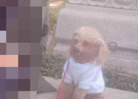 寻狗启示,请捡到的或者看到的联系我。,它是一只非常可爱的宠物狗狗,希望它早日回家,不要变成流浪狗。