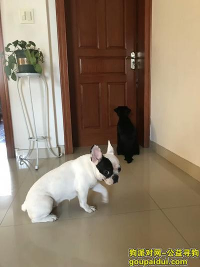 绍兴找狗主人,绍兴某小区内捡到一只走失的狗狗,它是一只非常可爱的宠物狗狗,希望它早日回家,不要变成流浪狗。