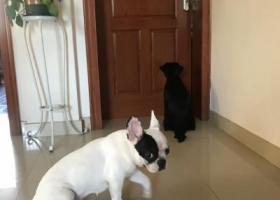 寻狗启示,绍兴某小区内捡到一只走失的狗狗,它是一只非常可爱的宠物狗狗,希望它早日回家,不要变成流浪狗。