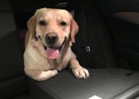寻狗启示,名字叫开开,在惠州下角凌湖走丢,它是一只非常可爱的宠物狗狗,希望它早日回家,不要变成流浪狗。