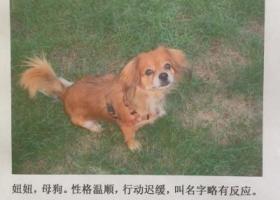 寻狗启示,寻找在丰台区银地家园附近丢失的狗狗妞妞,它是一只非常可爱的宠物狗狗,希望它早日回家,不要变成流浪狗。