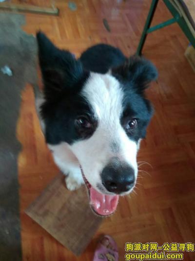 寻狗启示,8月7日,在门口被人抓走了,它是一只非常可爱的宠物狗狗,希望它早日回家,不要变成流浪狗。