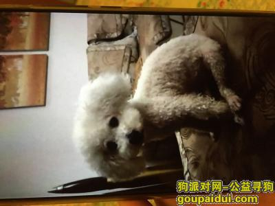 安庆丢狗,寻找8月8日晚在安庆市民广场体育馆附近走丢的小比熊,它是一只非常可爱的宠物狗狗,希望它早日回家,不要变成流浪狗。
