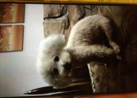 寻狗启示,寻找8月8日晚在安庆市民广场体育馆附近走丢的小比熊,它是一只非常可爱的宠物狗狗,希望它早日回家,不要变成流浪狗。