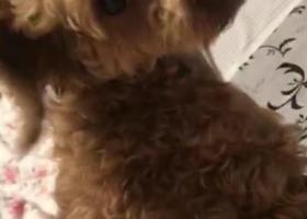 寻狗启示,无锡市宜兴市太隔广场寻找泰迪,它是一只非常可爱的宠物狗狗,希望它早日回家,不要变成流浪狗。