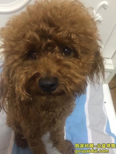 阜新丢狗,在阜新米家桥头附近 8月7号走丢一泰迪,它是一只非常可爱的宠物狗狗,希望它早日回家,不要变成流浪狗。