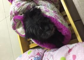 寻狗启示,狗宝于8月4号晚8点在广州市天河区车陂南路鸿发广场附近走失,它是一只非常可爱的宠物狗狗,希望它早日回家,不要变成流浪狗。