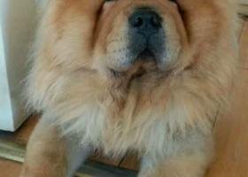 寻狗启示,急切寻狗信息,谢谢!,它是一只非常可爱的宠物狗狗,希望它早日回家,不要变成流浪狗。