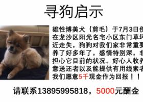寻狗启示,5000元重金寻找走失爱犬,它是一只非常可爱的宠物狗狗,希望它早日回家,不要变成流浪狗。