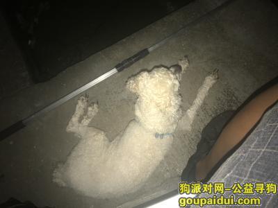 宁波捡到狗,梅墟,梅江东苑,白色泰迪,短毛,两只耳朵黑色,蓝色狗链带,它是一只非常可爱的宠物狗狗,希望它早日回家,不要变成流浪狗。