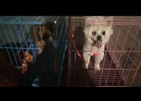 寻狗启示,我的两只可爱的狗狗,感情很深。,它是一只非常可爱的宠物狗狗,希望它早日回家,不要变成流浪狗。