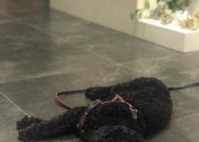 寻狗启示,恳请各位朋友协助,寻找爱犬清风,酬谢,它是一只非常可爱的宠物狗狗,希望它早日回家,不要变成流浪狗。