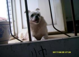 寻狗启示,临沂平邑街道找狗,跪求各位朋友帮忙,酬谢!!!,它是一只非常可爱的宠物狗狗,希望它早日回家,不要变成流浪狗。