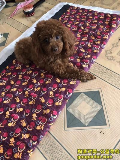 鞍山寻狗启示,寻找爱犬  找到重金酬谢,它是一只非常可爱的宠物狗狗,希望它早日回家,不要变成流浪狗。