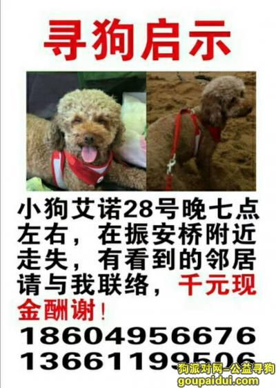 丹东找狗,寻找泰迪犬母你在哪里,它是一只非常可爱的宠物狗狗,希望它早日回家,不要变成流浪狗。