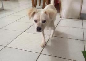 寻狗启示,帮狗狗寻找主人  8月19日清早本人在东莞樟木头电子城公交站捡得一只狗狗,它是一只非常可爱的宠物狗狗,希望它早日回家,不要变成流浪狗。