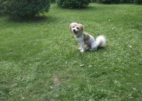 寻狗启示,请好心人帮忙寻找蝴蝶犬豆豆,它是一只非常可爱的宠物狗狗,希望它早日回家,不要变成流浪狗。
