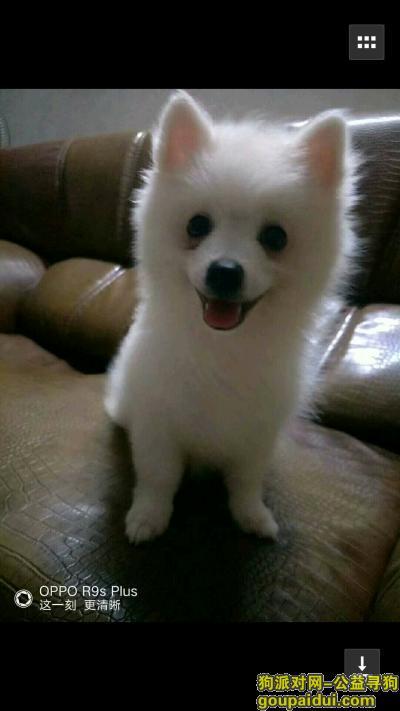 宜春找狗,帮忙找下我的狗狗旺财,它是一只非常可爱的宠物狗狗,希望它早日回家,不要变成流浪狗。