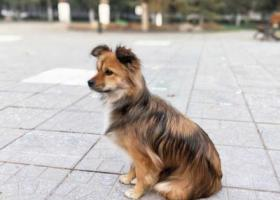 寻找养了三年的狗狗,非常着急!