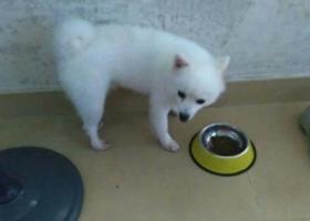 寻狗启示,台山找狗急,寻找爱犬有看到的恳请联系我,它是一只非常可爱的宠物狗狗,希望它早日回家,不要变成流浪狗。