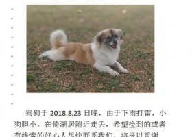 寻狗启示,狗狗回家,5000元重谢!而有信!,它是一只非常可爱的宠物狗狗,希望它早日回家,不要变成流浪狗。