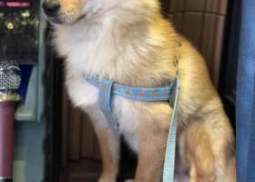 寻狗启示,小狗狗于8月21日晚上十点左右在大学城龙湖u城附近走失,请大家帮忙多多留意与转发,它是一只非常可爱的宠物狗狗,希望它早日回家,不要变成流浪狗。
