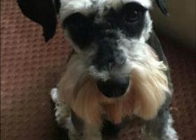 寻狗启示,石首市城区寻找爱狗,爷爷奶奶家附近走失,它是一只非常可爱的宠物狗狗,希望它早日回家,不要变成流浪狗。