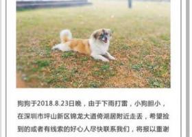 寻狗启示,5000元寻狗,重金酬谢,它是一只非常可爱的宠物狗狗,希望它早日回家,不要变成流浪狗。