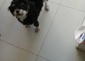 寻狗启示,寻找爱犬 在24号丢失,它是一只非常可爱的宠物狗狗,希望它早日回家,不要变成流浪狗。