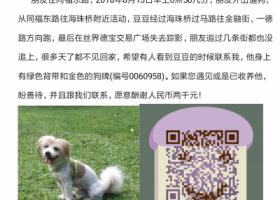 寻狗启示,广州海珠区荔湾区寻找蝴蝶犬豆豆,它是一只非常可爱的宠物狗狗,希望它早日回家,不要变成流浪狗。
