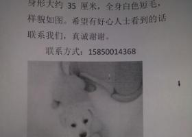 想念李白请帮我找到我的小白狗